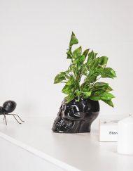 Doodshoofd pot zwart porcelein